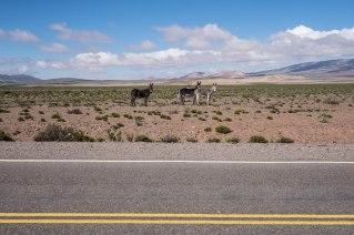 Ruta 33, entre Salta et Cafayate, Argentine, mars 2017