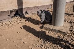 Camp d'Ain Issa, Syrie. Le camp, situé à une soixantaine de kilomètres de Raqqa, accueillait en septembre 2017 près de 15 000 personnes fuyant les combats dans les villes de Raqqa et de Deir Ezzor.